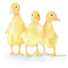 Three Ducklings Watercolor Painting Fine Art Print Giclee Print 8 x 10 ($18) ❤ liked on Polyvore featuring home, home decor, wall art, animals, art, birds, drawings, ducks, watercolor bird paintings and watercolor wall art