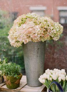 Wedding Ideas: white-hydranga-wedding-centerpiece