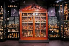 The Vrolik Museum is named after 19th Dutch anatomists Gerard (1775–1859) and Willem Vrolik (1801–1863). Their collection includes many zoological and comparative anatomical specimens, as well as many pathological specimens such as skeletons with rickets and other diseases of the bone. Since the redesign of the museum, these collections are now on display together for the first time since Willem Vrolik's death.