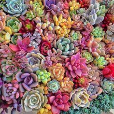 So beautiful!  Succulents