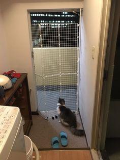 最近 「セルフリノベーション」どこいった?「ほぼ日手帳」どこいった? てなってるこのブログ。 ジメジメした季節をさらっと過ごすべく、久しぶりにセルフリノベーションしました。 玄関ドアの前に猫脱走防止扉を作ったよ〜