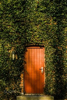 Niklas Hundtofte Photography by Niklas Hundtofte on 500px leaves red beauty nature contrast beautiful leaf happiness lifestyle green peaceful garden mystery secret growth welcome aarhus nature photograph Door Photography Denmark Picture Danmark århus entré