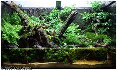 Paludaryum ise su kenarı ortamı taklididir. Bunlardada tankın bir kısmı su olur gerek ufak bir gölet olsun gerekse suyun içinden dışarıya çıkan bitkiler olsun bir çok çeşidi yapılabilir. Paludaryumlarda genelde amfibi beslemek en zevklisidir. Çünkü iki ortamıda kullanabilen canlıların yaşantısı izlemek bu ortamlarda zevkli olur. Paludaryumlarda şelaleler, ufak göletler yapılarak güzel çalışmalar yapılabilir. Paludaryumlarda genelde su kenarlarında yaşayan bataklık bitkileri yetiştirilir.