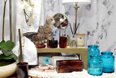 A Loja do Gato Preto | Acessórios de Banho #alojadogatopreto