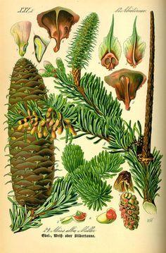 Pine Pollen is amazing It contains Vitamins A B-Carotene, B1, B2, B3, B6, Folic Acid, Vitamin D, and Vitamin E. Its host of minerals include Calcium, Copper, Iron, Manganese, Magnesium, Molybdenum, Phosphorous, Potassium, Selenium, Silicon, Sodium, and Zinc.