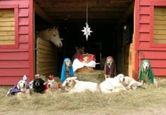 dog nativity...cute! I love that group of dogs and the people that work with them.
