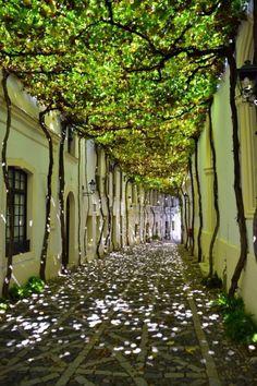 earthunboxed:Shady street in Spain
