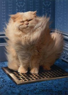 Just Funny Greeting Card - Cat Over Vent