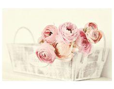 beautiful-flowers-pastels-photography-Favim.com-1518759.jpg (570×448)