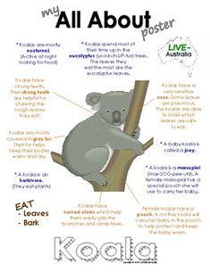 My All About Koalas Book / Workbook - (Australian Animal / Marsupial) Australia Fun Facts, Australia For Kids, Australia Animals, Fun Facts About Koalas, Bear Facts For Kids, Kids Facts, Animals Information, Rainforest Animals, School Info