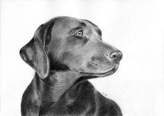 Portret psa, wyżła.