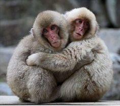 animal loving - Google Search
