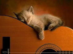 cat sleeping on a guitar