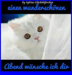 Schönen Abend Good Night, Wish, Cats, Relax, Animals, Good Nite Images, Happy Birthday Songs, Nighty Night, Gatos