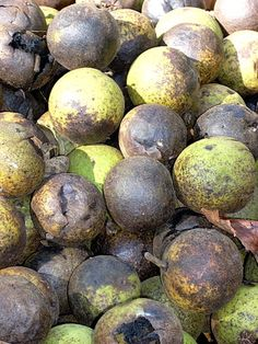 There are several tricks you can use to prepare your black walnut crop.: Black Walnuts in Husk Just Dropped from Tree