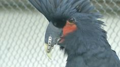 Bullied parrot finds new confidence with 3D-printed beak - http://eleccafe.com/2016/04/25/bullied-parrot-finds-new-confidence-with-3d-printed-beak/