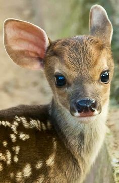 Precious baby deer.