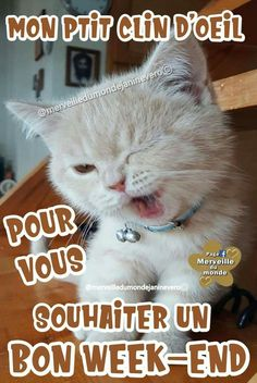 Bon Weekend, C'est Bon, Week End, Cats, Animals, Image, Facebook, Have A Good Night, Handsome Quotes