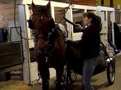 Here's a surprise, it's not that easy getting a horse ready to race - YouTube