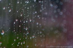 7/22 비가 미친듯이 쏟아지던 아침 8시,  리무진 버스에 몸을 싣고 공항을 향해 갑니다...