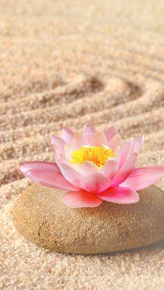 fond d'écran huawei # iphone Zen Wallpaper, Galaxy Wallpaper, Flower Wallpaper, Wallpaper Backgrounds, Screen Wallpaper, Exotic Flowers, Beautiful Flowers, Boxing Day, Jolie Photo