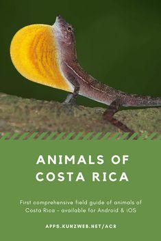 Animals of Costa Rica App Amphibians, Reptiles, Mammals, Marine Fish, Little Boy Fashion, Field Guide, Costa Rica, Spiders, App