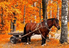 Photo about Waiting horse in golden autumn forest. Image of countryside, branches, colors - 9605369 Fall Season Pictures, Fall Pictures, Horse And Buggy, Horse Love, Big Horses, Most Beautiful Animals, Beautiful Horses, Autumn Scenes, Lovely Smile