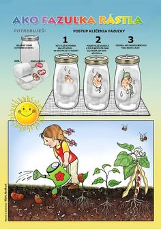 Science Notes, Science For Kids, Spring Activities, Activities For Kids, Experiment, Plantation, Life Cycles, In Kindergarten, Diy And Crafts