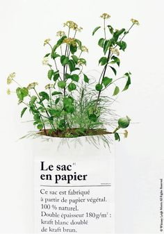 OFF our best-selling Paper Bag - Bodie and Fou - Award-winning inspiring concept store The Paper Bag, Pot Plante, Morris, White Prints, Deco Floral, Green Life, Green Bag, House Plants, Natural