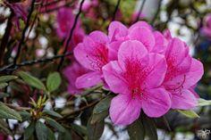 IMG_1082_DxO | Flickr: partage de photos!