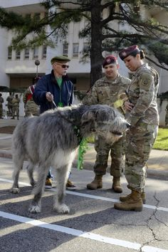 Paratroopers march in Annual Raleigh Saint Patrick's Day Parade Huge Dogs, Giant Dogs, Animals And Pets, Funny Animals, Cute Animals, Irish Wolfhound Dogs, Military Dogs, Rottweiler Dog, Dog Rules