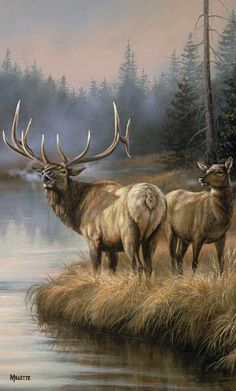 Elks Crossing Wildlife Garden Flag Spring Double Sided Mini Banner x Wildlife Paintings, Wildlife Art, Animal Paintings, Vida Animal, Mundo Animal, Elk Pictures, Animal Pictures, Wild Life, Photo Animaliere