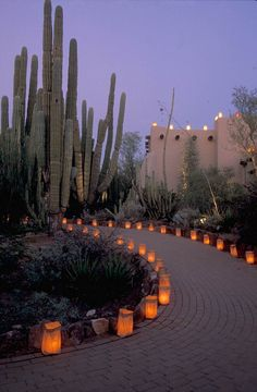 The Luminaria in the Desert Botanical Garden, Phoenix. Paving the walkway with luminaria would be a lovely touch for a home.