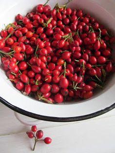 PASTU domov: Šípkový sirup Fruit, Garden, Lemon, Syrup, Garten, Lawn And Garden, Gardens, Gardening, Outdoor