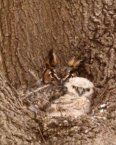 Mama keeps you warm and safe !!!