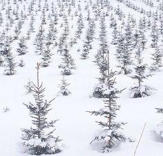 少しクリスマスツリー