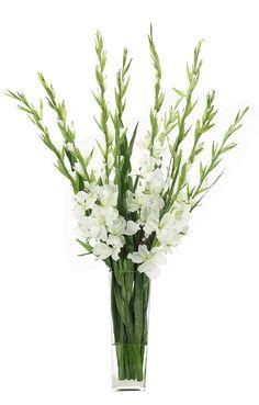 Gladiola (WF398): Gladiola, White, Glass Tapered Square, 27wx25dx48h