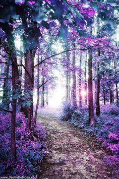 Purple #Path ☄