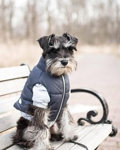 "10.9k Likes, 172 Comments - Schnauzer World!® (@schnauzerworld) on Instagram: ""BIG CHRISTMAS SALE Tap link in our bio @schnauzerworld to see SALE CODE! . credit:…"""