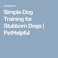 Simple Dog Training for Stubborn Dogs   PetHelpful