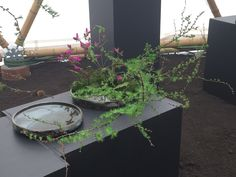 Composition florale type Ikebana Ohara