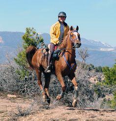 Get back into endurance horse racing <3