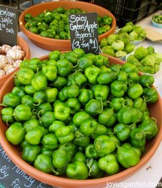 Spicy green apple peppers - I'd never seen these before