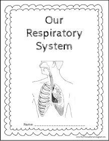 human digestive system unlabeled Human Digestive System