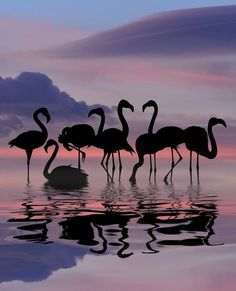 "gyclli: "" 'flamingo silhouettes' // Wonderful Art Silhouette by Greek Artist Dominic Liam Photography (dominicliam) https://www.instagram.com/p/BIMseCVAp6m/ """