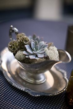 Thrift store finds - an old silver gravy boat makes a lovely succulent planter