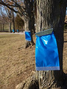 c8f829ec399 Supplies needed for tapping back yard maple trees and making maple syrup.  Tips and information on making maple syrup making.