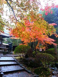 2012/11/23 醍醐寺