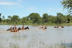 Our volunteers swimming with the horses.