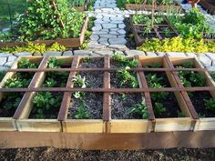 Paving stones around garden boxes